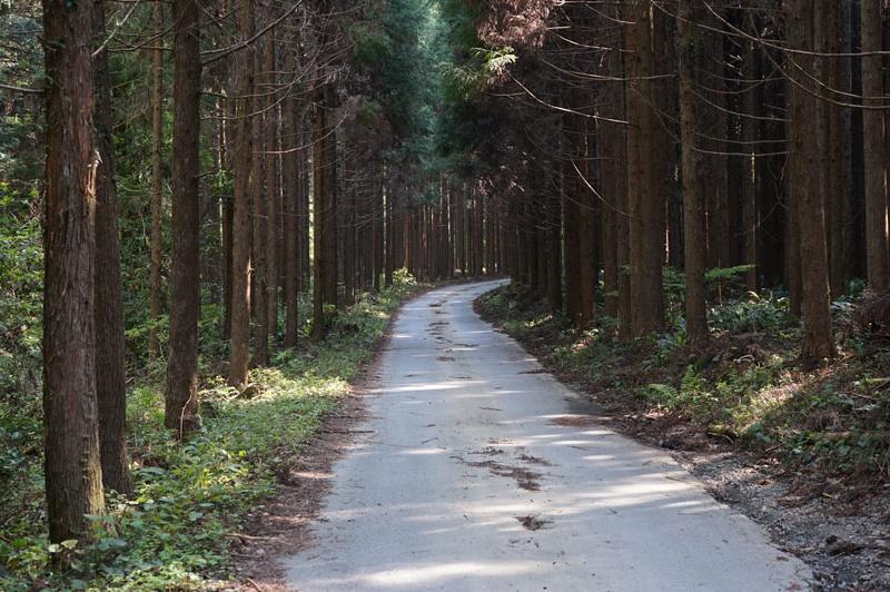 花桃の里の天竜美林