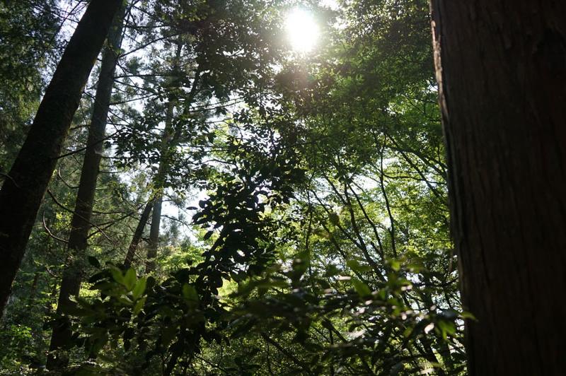 天竜美林と陽光